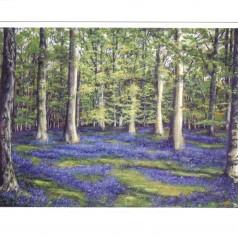 Yorkshire bluebells